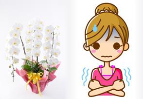 寒い(10度以下)は苦手で、真夏の30度以上も苦手な花
