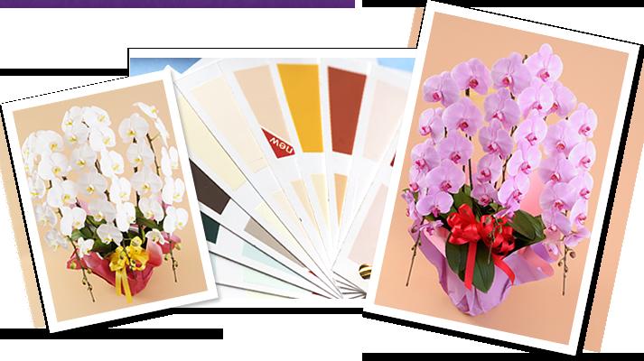 どういう色の胡蝶蘭を選べば良いですか?