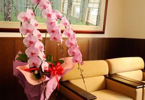 胡蝶蘭をいただいたのですがまた来年咲かせることが出来ますか?