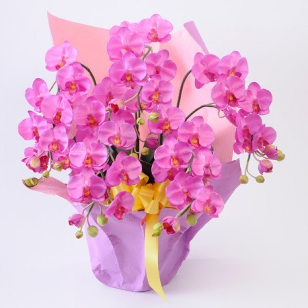 光触媒 5本立胡蝶蘭 ピンク