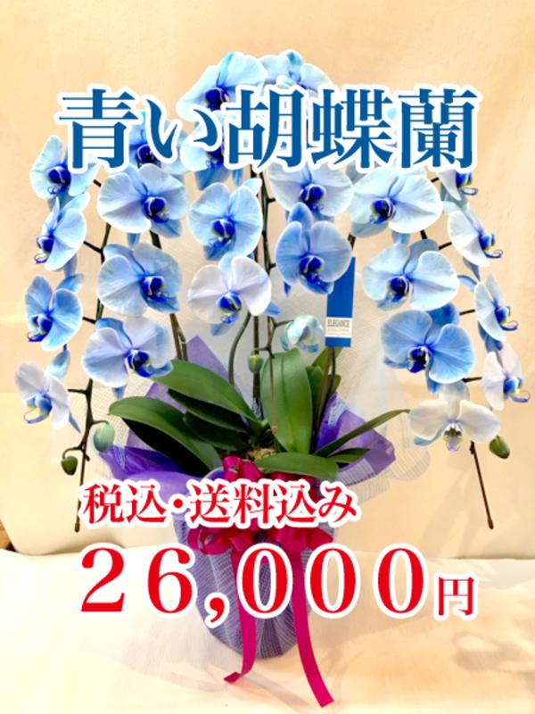 青い胡蝶蘭!希少価値の高い「ブルーエレガンス」
