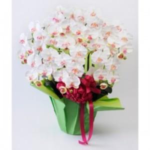 光触媒(造花) 7本立胡蝶蘭 白赤