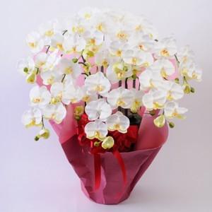 光触媒(造花) 7本立胡蝶蘭 白