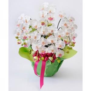 光触媒(造花) 5本立胡蝶蘭 白赤