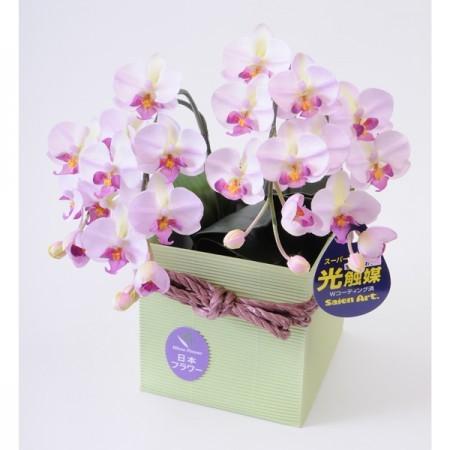 光触媒(造花) 2本立胡蝶蘭 ピンク